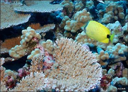 nwhi-coral.jpg